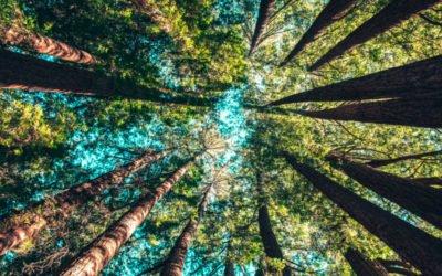 Comment intégrer le développement durable aux entreprises ?