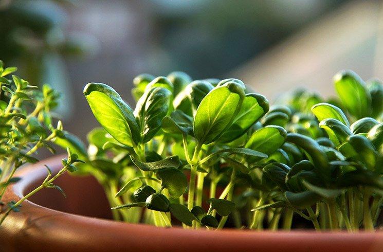 Découvrez les webinaires Corporate Garden qui peuvent vous aider à réussir votre potager d'intérieur !