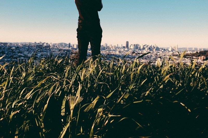 Protection de l'environnement: la place du végétal dans les villes