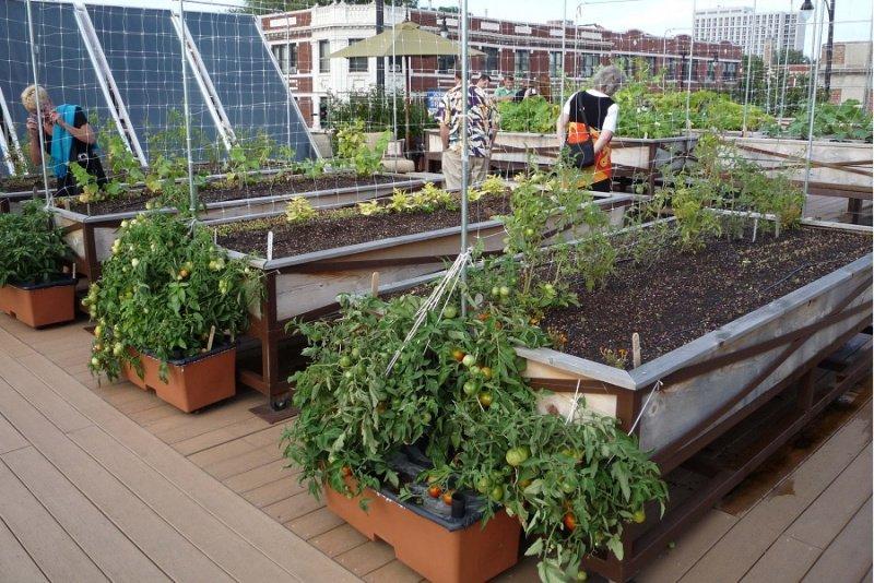 Comment créer un jardin bio ?