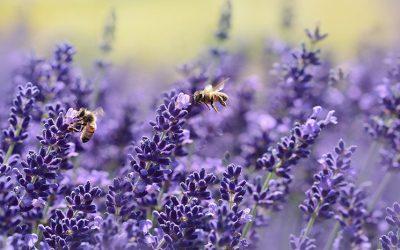 Biodiversité et entreprise : quels liens ?