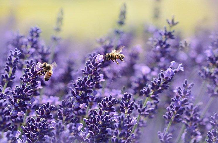 En préservant la biodiversité, votre jardin d'entreprise favorise le retour des insectes pollinisateurs.