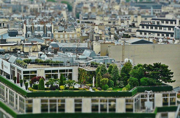 Un jardin d'entreprise en toit-terrasse peut offrir suffisamment d'espace et de luminosité pour varier les plantations.