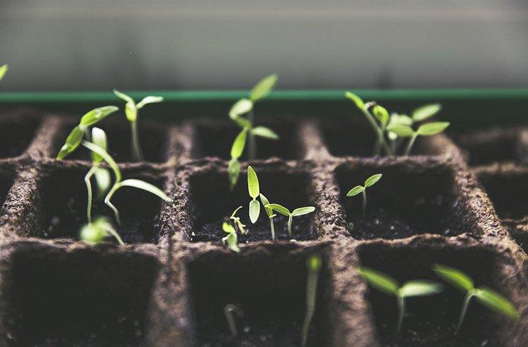 Dans votre jardin d'entreprise d'intérieur, plantes et potager en pot dévoilent le miracle de la vie.