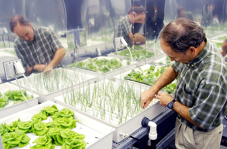 L'aquaponie fait partie de ces solutions innovantes développées pour relever le défi de la diminution des surfaces cultivables.