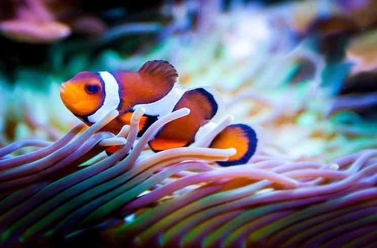 L'aquaponie, ou quand poissons et végétaux vivent en collaboration étroite.