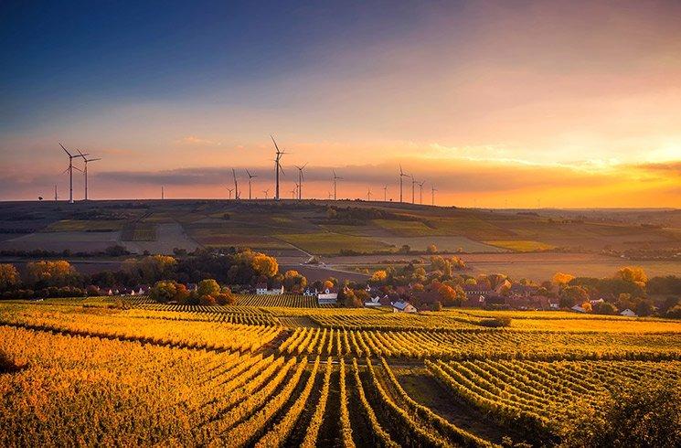 Les modes de culture en milieu urbain se proposent de libérer l'agriculture du monde rural.
