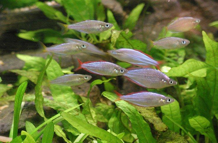 L'aquaponie vous offre la solution idéale pour créer un jardin d'intérieur économique et écologique.