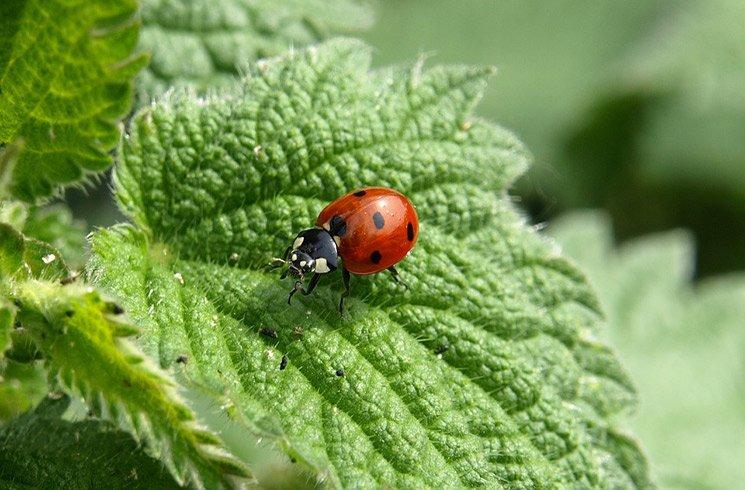 Permaculture et biodiversité riment avec jardin d'intérieur bien rentabilisé !