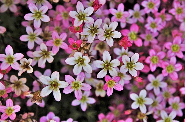 Les petites fleurs font parfois les plus beaux jardins d'intérieur !