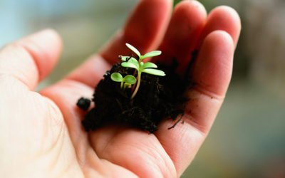 Comment concilier agriculture et environnement ?