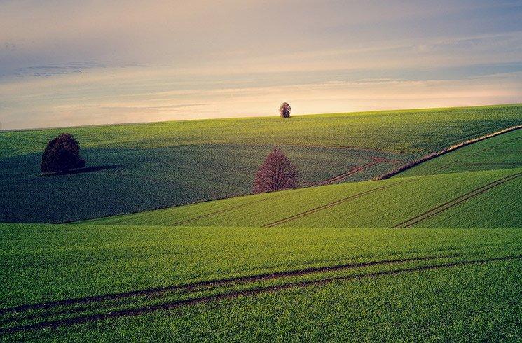 Une vaste étendue de champs, résultat de l'agriculture intensive