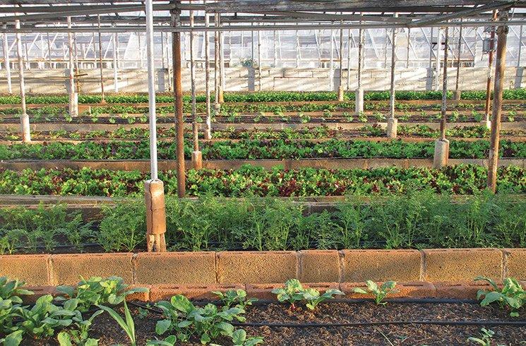 De vastes serres en ville, l'avenir de l'agriculture ?