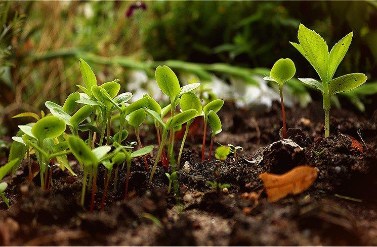 Préserver le fragile équilibre des sols, respecter le rythme de la nature.