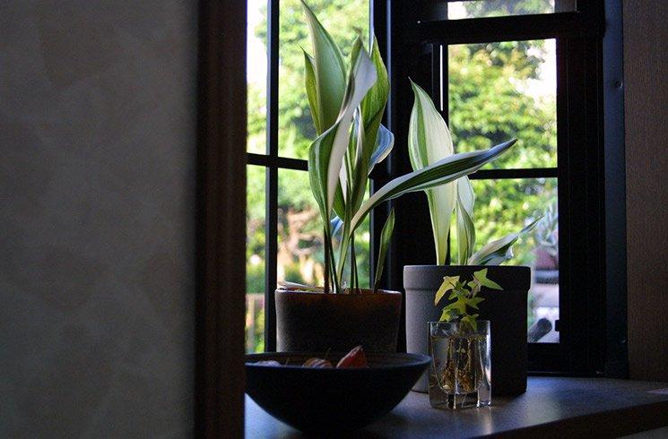 10 plantes de bureau sans entretien